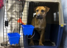 Tanjug / Craig Ruttle/AP Images for Humane Society International