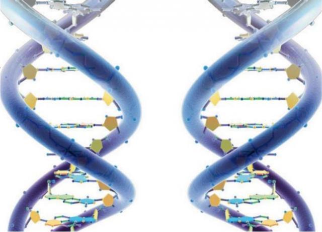 Neispravna i ispravna prezentacija molekula DNK