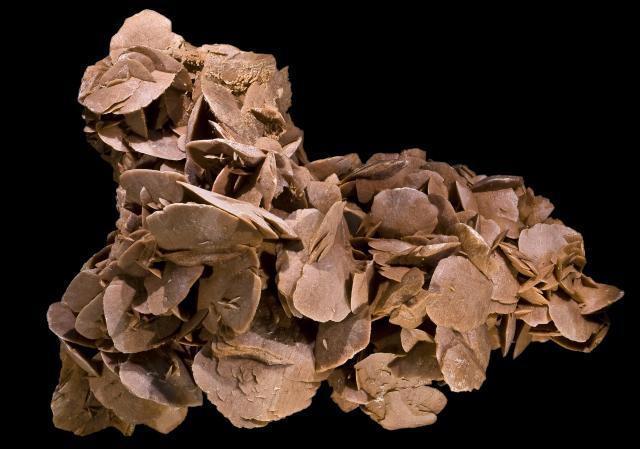 Pustinjska ruža (Foto: Didier Descouens / Wikimedia Commons)