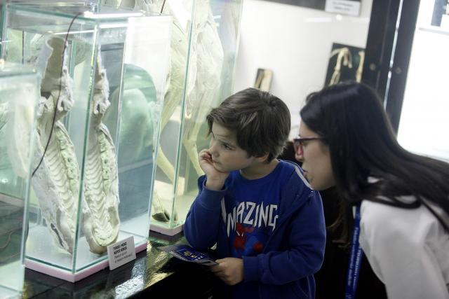 Muzej veterinarskog fakulteta (Foto: Noć muzeja)