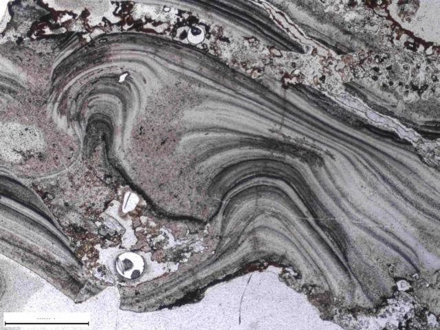Mikroskopska fotografija teksture gejzirita na Dreser formaciji. Ona je dokaz da su mineralne naslage počele da se talože na ovom mestu pre 3,5 milijardi godina (Foto: Nature Communications)