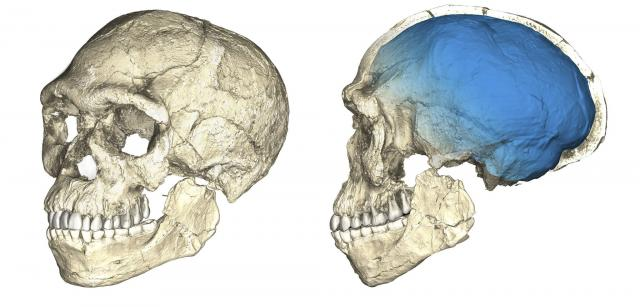 Foto: Tanjug/Philipp Gunz/Max Planck Institute for Evolutionary Anthropology via AP