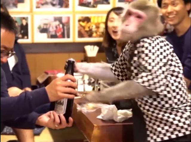 Restoran-u-kome-ce-vas-usluziti-neobicni-konobari-majmuni