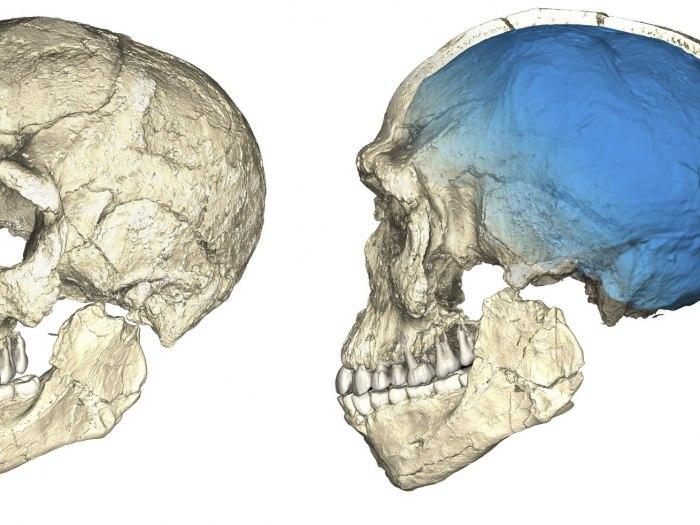 Metoda za datiranje fosila