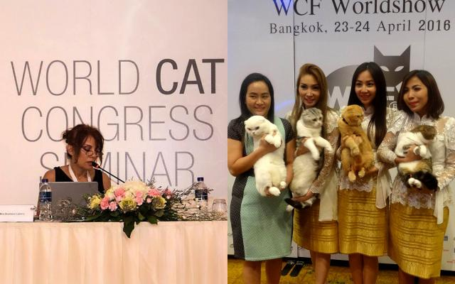 World Cat Congress, Tajland 2016.