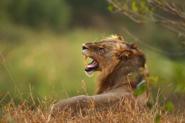 Lavovi, tigrovi, jaguar pobegli iz nemačkog zoo vrta