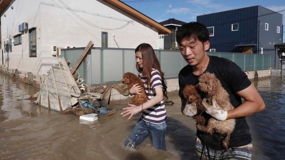 Stanovnici prefekture Okajama spašavaju pse od poplave/AFP