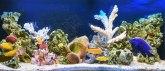 Planirate da nabavite ribice i akvarijum? Evo koliko može da Vas košta