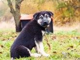 Kako da napravite jeftinu kućicu za pse?