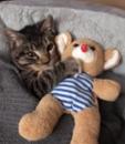 Ova maca ne može da zaspi bez svoje plišane igračke VIDEO