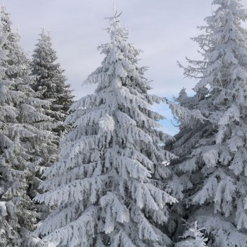 Kopaonik / thinkstock