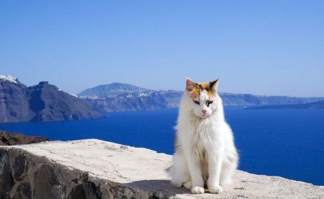 najbolje uska maca