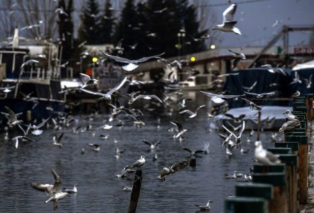 "Ohrid ""pod opsadom"""
