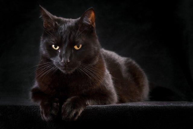 veliki kurac u uskim slikama maca