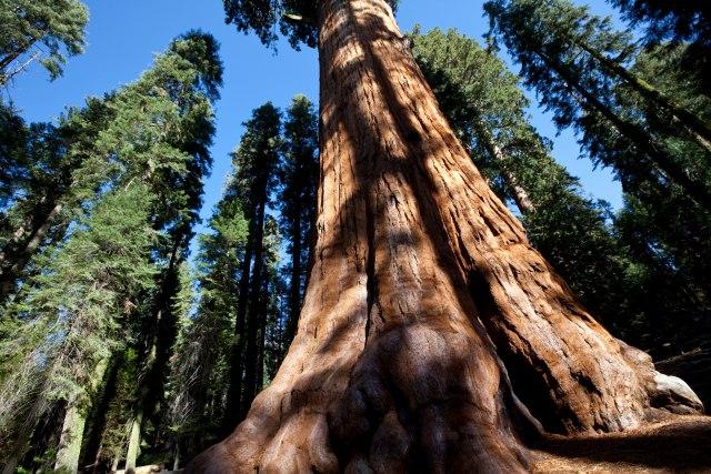 Najčuvanija tajna Kalifornije: Skriveno u šumi, ali visoko iznad nje